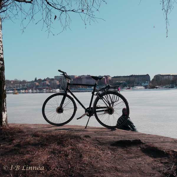 Cykel wk