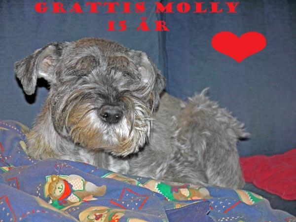 Grattis Molly