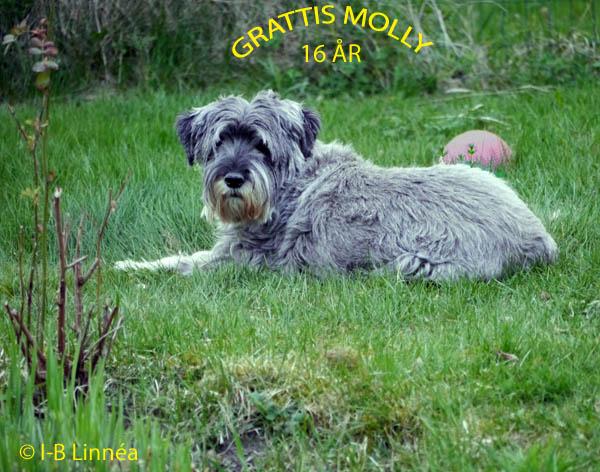 1 Molly 16 wk_redigerad-1