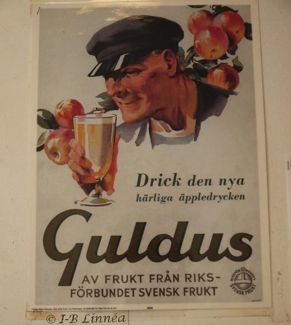 Guldus